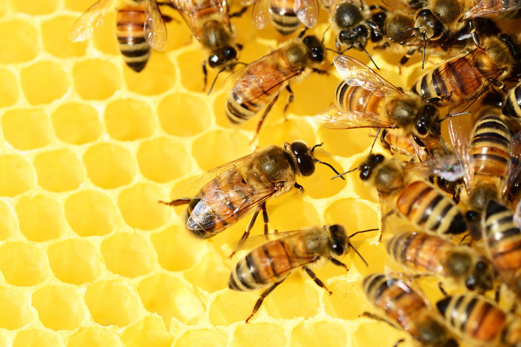 honey beehive sound library soundholder